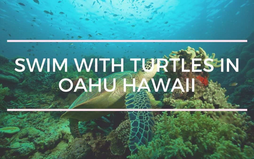 Swimming & Snorkeling with Turtles on Oahu, Hawaii