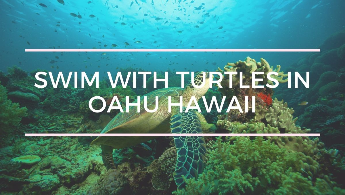 Swimming with Turtles on Oahu