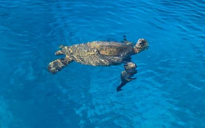 Snorkeling Safety Tips in Hawaii